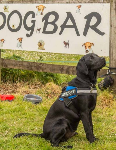 Dorset Knob Throwing 2019: And dogs are welcomed and catered for