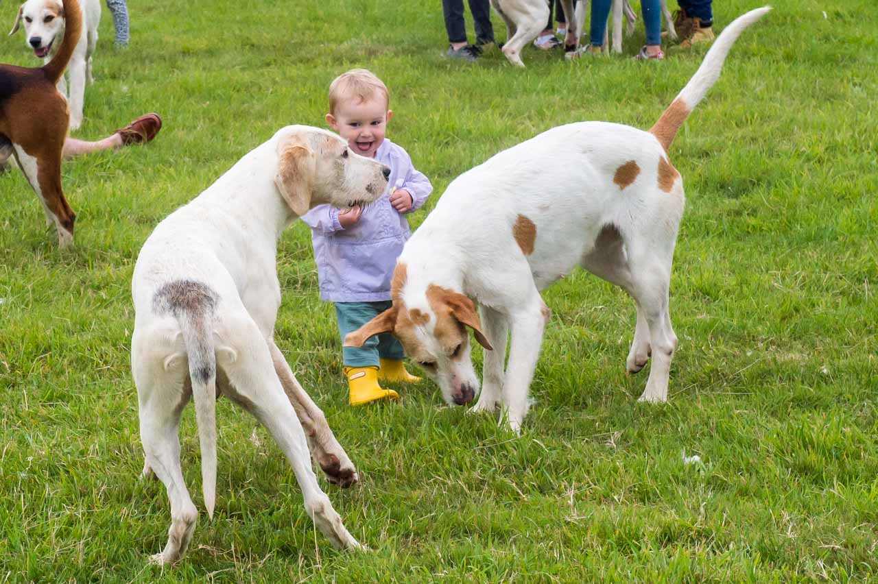 A youngster delights in the company of a couple of Hounds