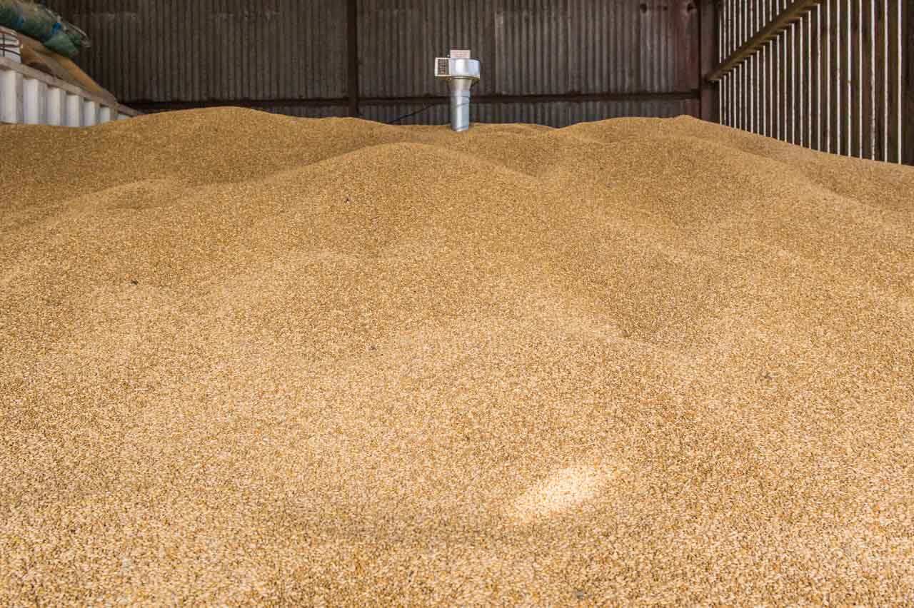 The third week of August and an excellent yield of organic Barley is in the Manor Farm store