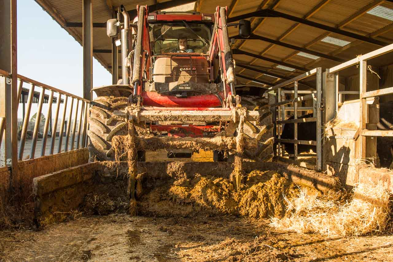 The daily scraping out of the indoor feed passages