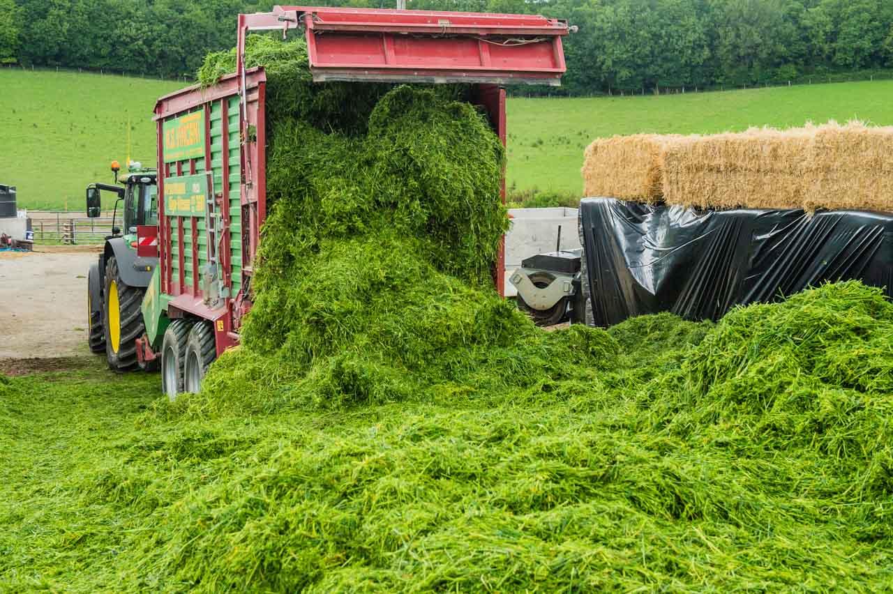 Unloading the Barley and Pea crop in the Manor Farm farmyard