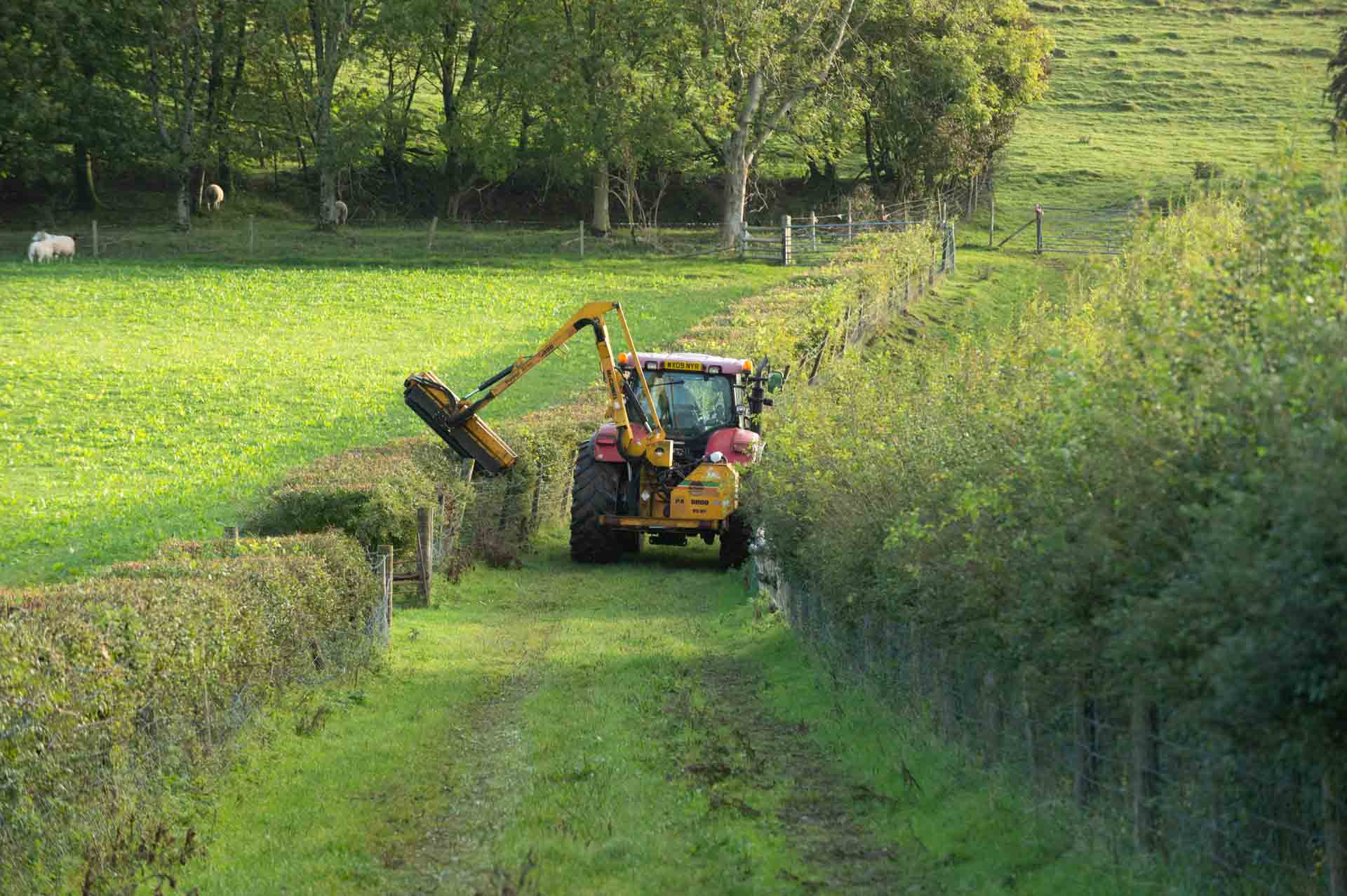 Pearce beginning the task of cutting the mixed hedges
