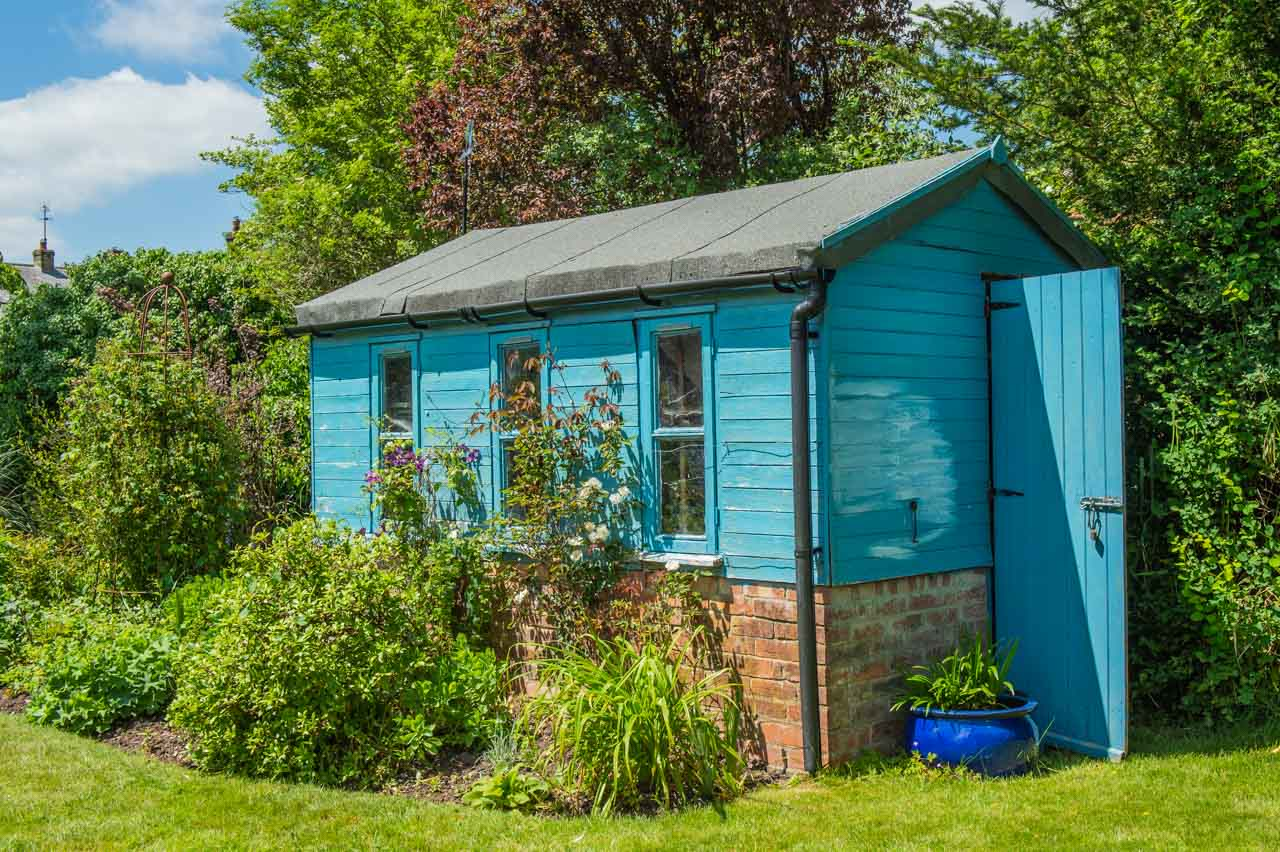 3. Julian and Jen: A blue shed makes an ideal background for a Rambling rose and a Clematis