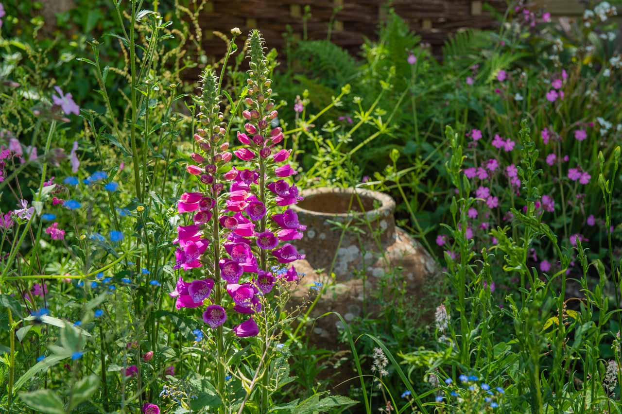 6. Jo: Backlit Foxgloves and a well placed urn in the background