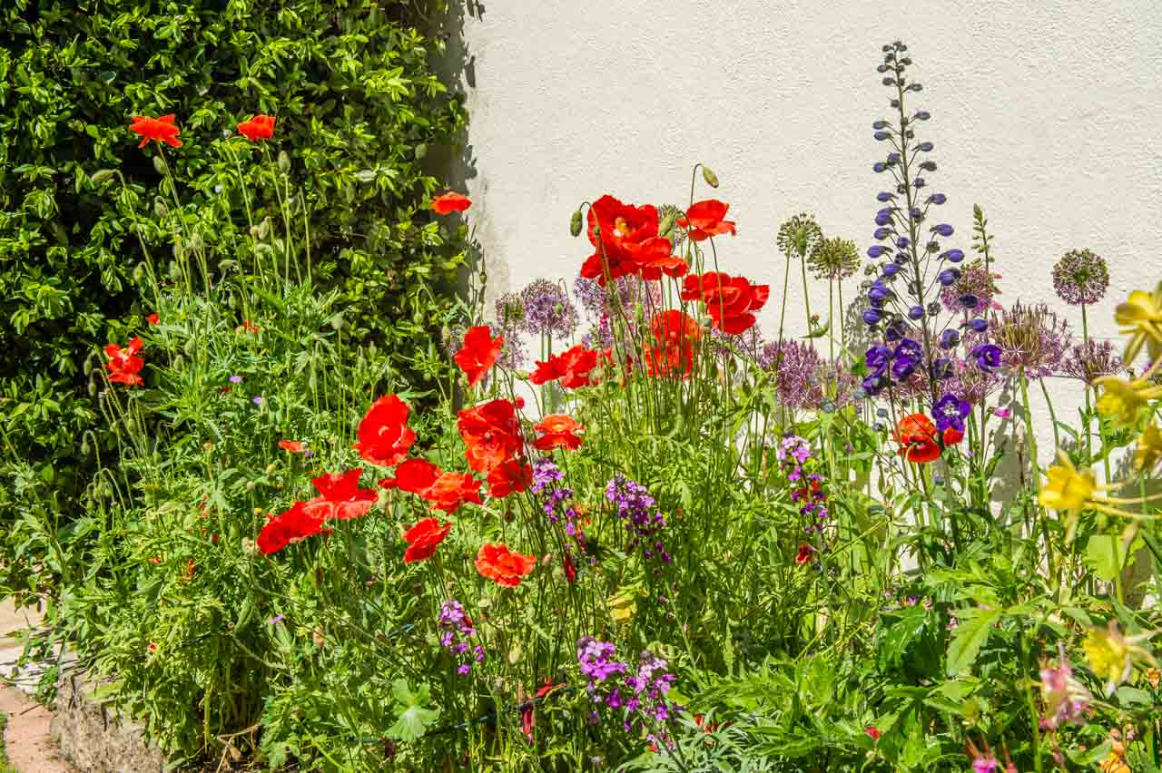 7. Roma and Neil: The west facing courtyard border with its Poppies and Alliums