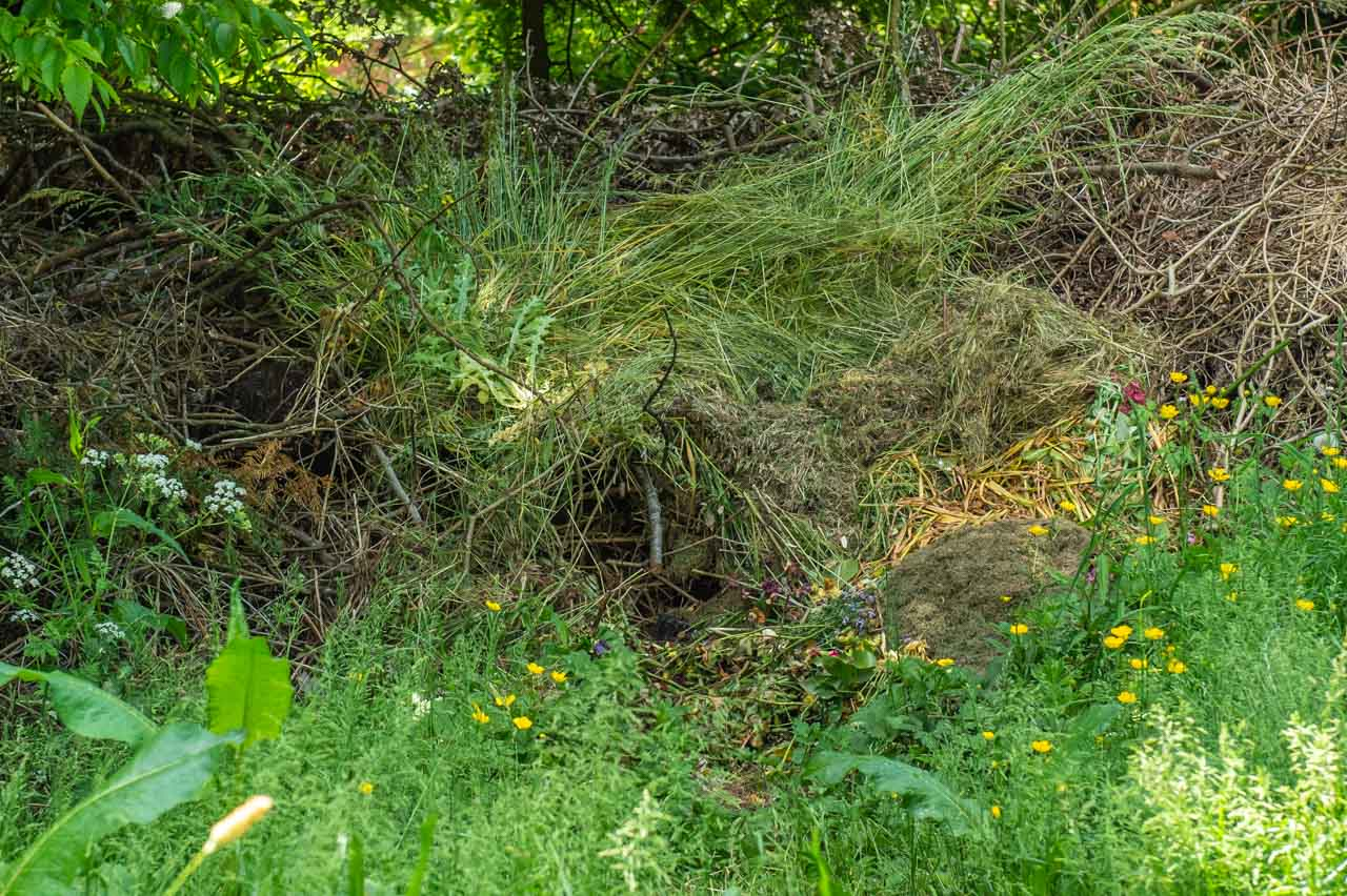 Compost competition: The Church's compost pit includes a Hedgehog's nest