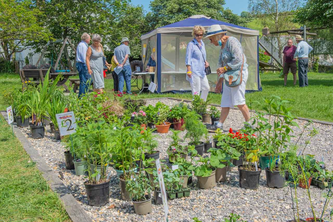 Plants for sale: Displayed on the village Boule pitch