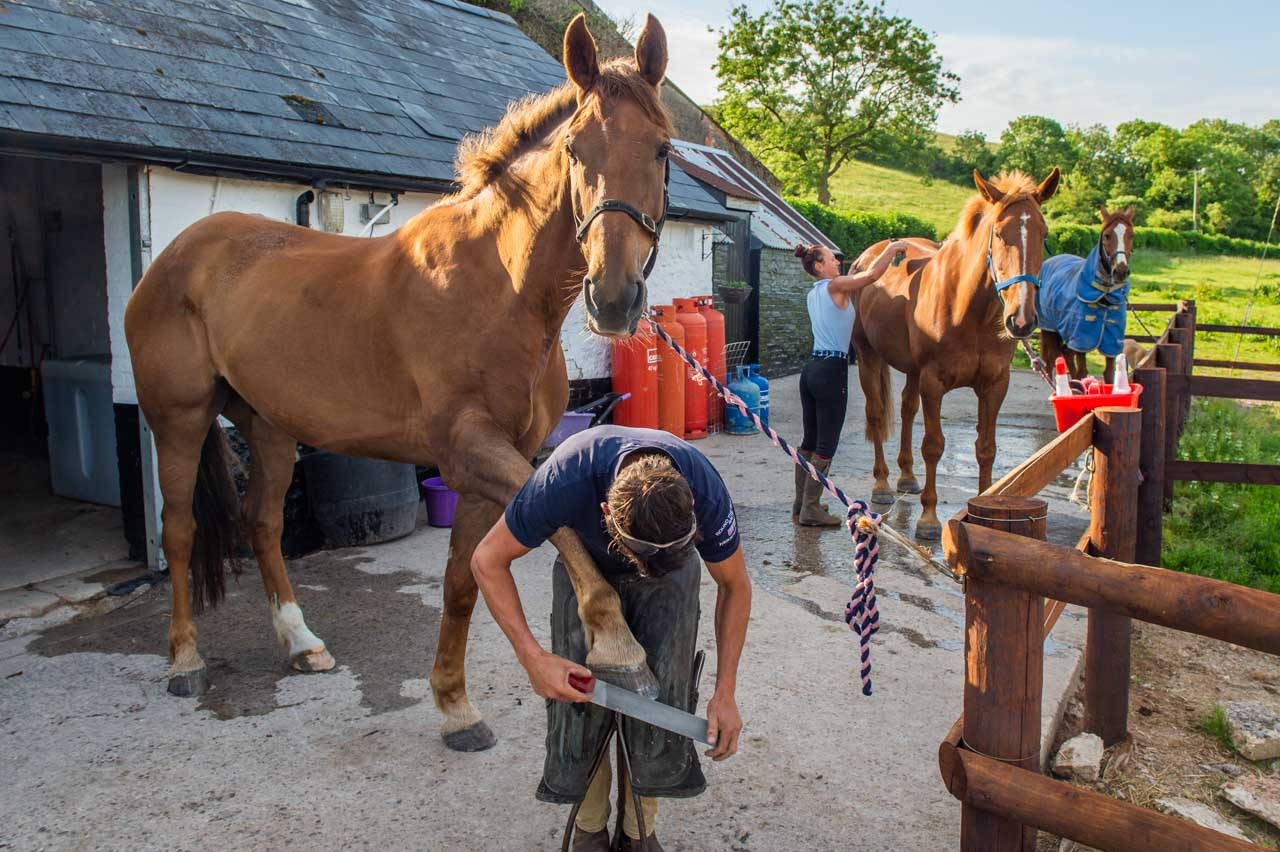 A busy yard, as Beau is reshoed, Thomas is groomed and Oliver looks on