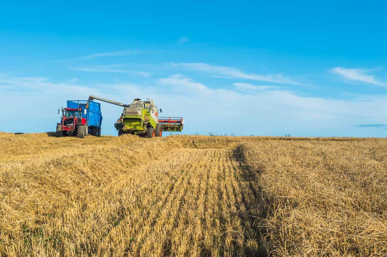 Barley being harvested