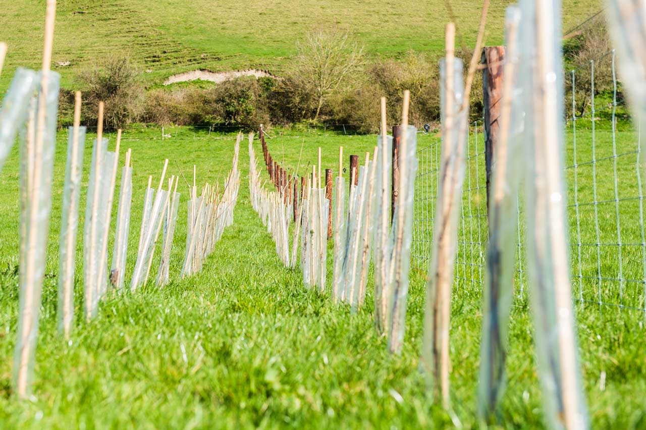 Agroforestry: Another hedge of Blackthorn, Dogwood, Hawthorne and Hazel being planted